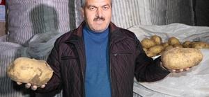 Nevşehir patatesi Diyarbakır karpuzu ile yarışıyor 1 patates 1 kilo 700 gram geliyor