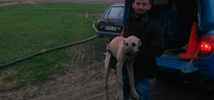 Trafoyu hırsızlara karşı koruyan köpeği çaldılar