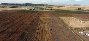 Kayseri'de patates hasadı devam ediyor