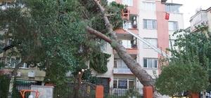 Aydın'da fırtına hayatı olumsuz etkiledi Asırlık çam ağacı apartmanın üzerine devrildi