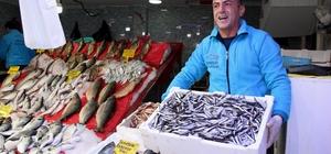 Balıkçıların gözü palamuttan sonra hamside
