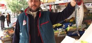 Palamut tahtını hamsiye devrediyor Hamsi en ucuz gıdalardan biri Bandırma'da hamsinin kilosu 10 TL'yi gördü