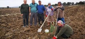 Gönen'de zeytinler dikiliyor, yüzler gülüyor Gönen'de 100 hektar zeytin fidanı ile buluştu