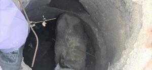 Rögara düşen koyunu belediye ekipleri kurtardı