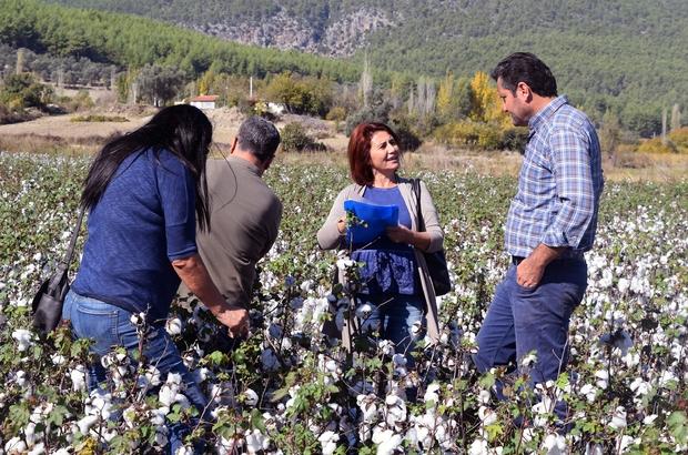 Pamuk ekim alanları kontrolü yapıldı Seydikemer Tarım ve Orman Müdürlüğü Teknik Ekipleri, Ortaköy ve Ören Mahallelerinde pamuk üretim alanlarında tespit ve kontrolleri yaptı.