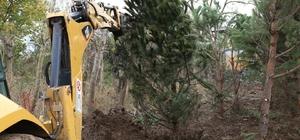 Metro proje alanındaki ağaçlar özenle taşınıyor