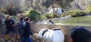 Havuza düşen domuzu itfaiye kurtardı