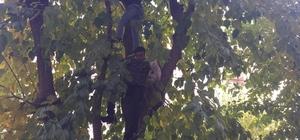 Ağaçta mahsur kalan kedi için esnaf seferber oldu