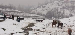 (Özel) Aç kalan at sürüsüne belediye sahip çıktı Kış mevsimiyle dışarıda aç ve susuz bırakılan atların sahipleri aranıyor