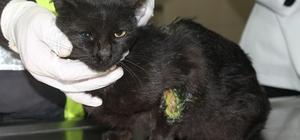 """Araçları çalıştırmadan önce dikkat Soğuk kış aylarında araç motoruna sıkışan kediler korkutuyor Motora sıkışan kedi, kontrol edilmeden aracın çalıştırılması sonucu yaralandı Vücudunun bir bölümünde yanıklar meydana gelen kedi, Eskişehir Tepebaşı Belediyesi Doğal Yaşam Merkezi'nde tedavi altın alındı Merkez görevlisi Veteriner Hekimi Melike Gümgümcü; """"Son bir haftada 3 kez böyle vakalar ile karşılaştık"""" """"Vatandaşlardan istediğimiz sabahları arabalarını çalıştırmadan önce kaputa bir şekilde vurmaları"""""""