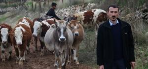 Siirt'te İŞKUR desteğiyle çiftlik kurdu Görme engelli işsiz genç, İŞKUR'dan aldığı 36 bin TL hibe ile hayvancılık sektörüne girdi 10 inekle başladı 60 ineğe çıkarmayı hedefliyor