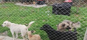Sapanca Kadın Meclisin'den hayvan barınağına ziyaret