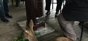 Dereden kurtardıkları karacayı ısınması için kahvehaneye götürdüler