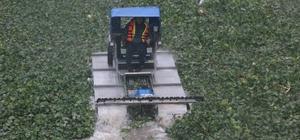 Yağmur altında su sümbülleriyle mücadele Asi Nehri'ndeki su canavarlarını temizlemek için amfibik araç kiralandı