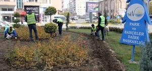 Van'da 100 bin lale ve sümbül soğanı ekildi