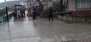Cide'de fırtına etkili oldu