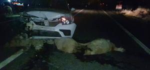 Aracın çarptığı 14 koyun telef oldu