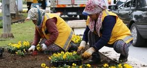Büyükşehir Aydın'ı kış çiçekleriyle güzelleştiriyor