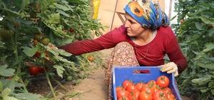 Antalya'da yılbaşı öncesi artan ürün fiyatları üreticiyi sevindirdi Yurt dışından gelen fazla talep ürün fiyatlarını yüzde 100-200 arası arttırdı Irak piyasasının daralması ile düşen domates yeniden yüz güldürdü