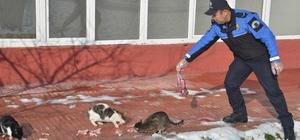 Polis ve öğrenciler, sokak hayvanları için doğaya yem bıraktı