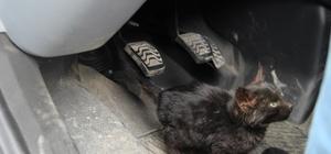 Cenaze aracına sığınan yavru kedi, donmaktan kurtarıldı