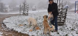 Bozüyük Belediyesi kırsaldaki sahipsiz sokak hayvanlarını unutmadı
