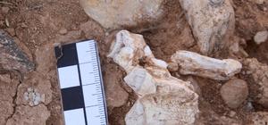 Denizli'de yaklaşık 9 milyon yıllık hayvan fosilleri bulundu Denizli'de dinozorların yaşam izleri aranacak