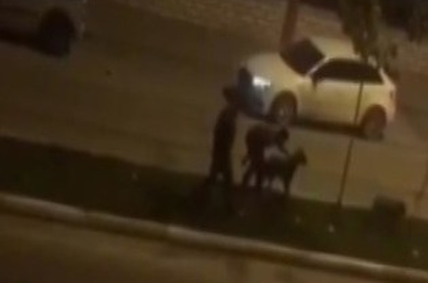 Batman Haberleri: Köpeklere işkenceden yakalandı, cinayet zanlısı çıktı