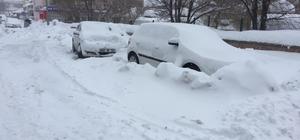 Karlıova'da kar ve tipi etkili oluyor Vatandaşlar hayvanların aç kalmaması için belirli noktalara yiyecek bırakıyor