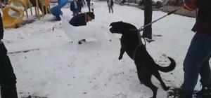 Kardan köpeği gerçek sanınca