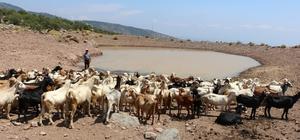 Büyükşehir'den hayvanların susuz kalmaması için yaşam vahaları