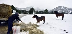 Atlara yem, kuşlara meyve, köpeklere mama Adana Büyükşehir Belediyesi ekipleri karla kaplı ilçelerde hayvanlara besin desteği sağladı