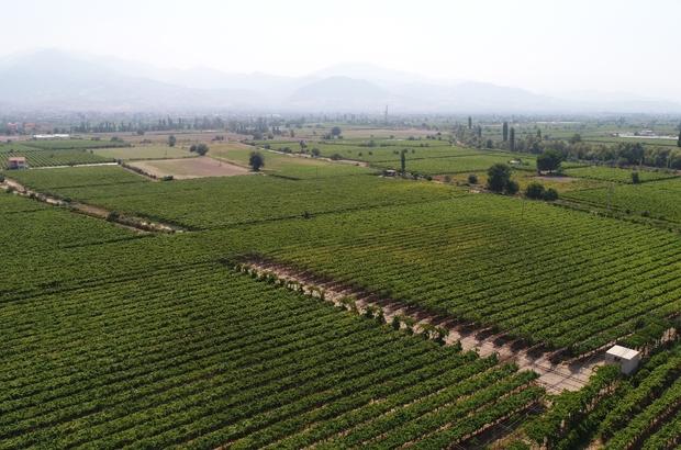 Manisa 2018 yılında 500 bin tondan fazla tarım ürünü ihraç etti Türkiye'de tarımsal birçok alanda ilk sırada yer alan Manisa 2019 yılında da üretim ve üretici desteklenecek