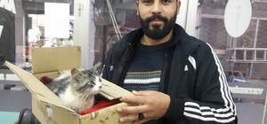 Yavru kediyi donmaktan kurtardı Yunus Emre Polat, tedavisi tamamlanan kediyi sahiplendi