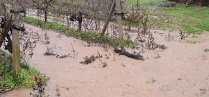 Sağanak yağış tarım arazilerini de etkiledi