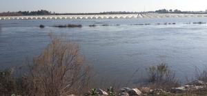 Seyhan Nehri'nin debisi yükselince tarlaları su bastı