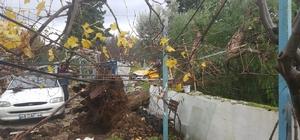 Datça'da fırtına asırlık ağacı kökünden söktü