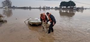 Foça'dan kiraladığı tekneyle köpeğini kurtardı Manisa'da yaşanan su baskınları sonrası çiftçiler bağ evlerindeki hayvanlarını kurtarmaya çalışıyor