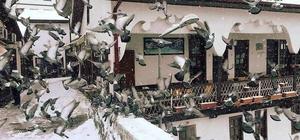 Soğuk havada Leylekli Köprüsü'ne akın ediyorlar Tarihi Leylekli Köprüsü üzerinde yem kapma yarışı yapan güvercinler, İstanbul Sultanahmet'teki görüntüleri aratmadı