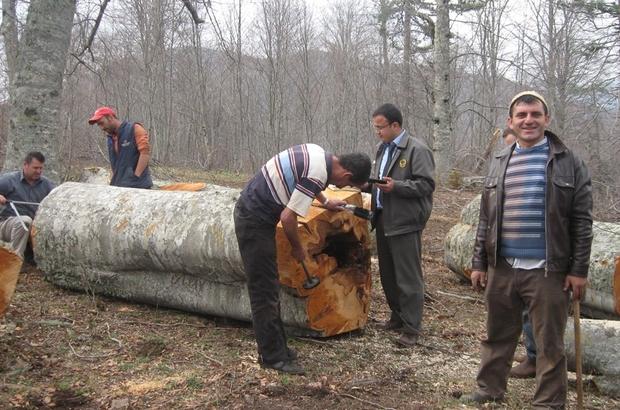 Ogm 7 Milyon Kii Orman Kynde Yayor