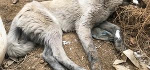 Yüksekova'da köpek donduran soğuklar Etkili olan olumsuz hava şartları nedeniyle bir köpek dondu