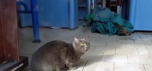 Kediyi kurtarmak için seferber oldular 25 gündür markette kilitli kalan kedi kurtarılmaya çalışıldı