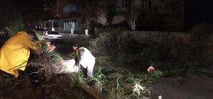 Aydın'da Büyükşehir ekipleri fırtına mesaisi yaptı