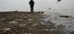 """Kocaeli Büyüşehir Belediysi: """"Denizanalarının çoğalma nedeni kirlilik değil, doğa olayı"""""""