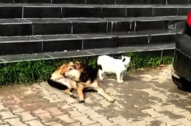 Güneşlenen kedi ile köpeğin dostluğu Mersin'de güneşin keyfini çıkaran kediyle köpeğin dostluğu ilginç görüntüler ortaya çıkardı