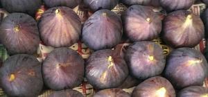 Ege meyve sebzeleri Almanya'da zirvede Almanların tercihi Türk meyve sebze ve mamulleri oldu