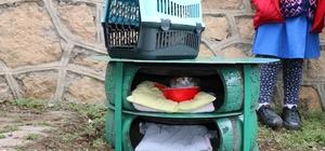 Sokakta yaşayan kedilere sıcak yuva