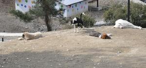 Sevgililer, 14 Şubat öncesi hayvan barınağına koştu 14 Şubat Sevgililer Günü'nde sevgilisine kedi, köpek hediye etmek isteyenler hayvan barınağına koştu