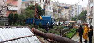İzmir yağmura teslim Ağaç sokağa devrildi, 3 araç hasar gördü