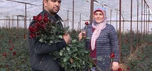 Güllerin içinde Sevgililer Günü kutlaması Gül üreticileri Sevgililer Günü'nü kutluyor